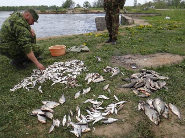 Семью смоленских рыбаков оштрафовали на 1,3 млн. рублей