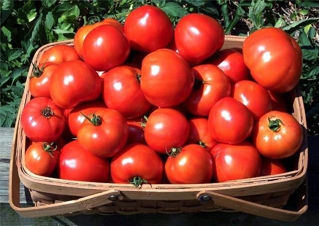 Секреты выращивания томатов