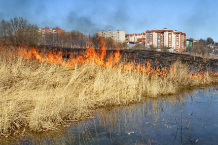 В каких районах Смоленской области зарегистрировано больше всего палов травы