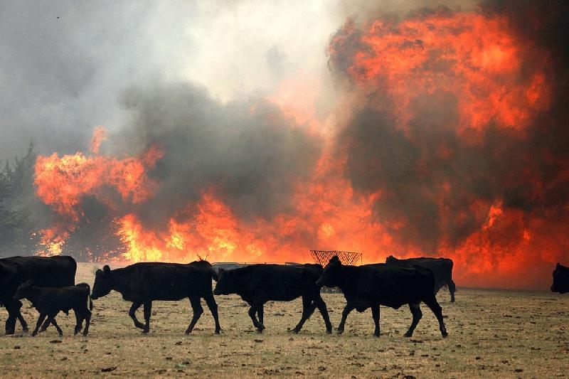 В Смоленской области сгорела ферма