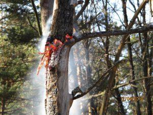 В лесах Смоленской области зарегистрирован первый в текущем пожароопасном сезоне пожар
