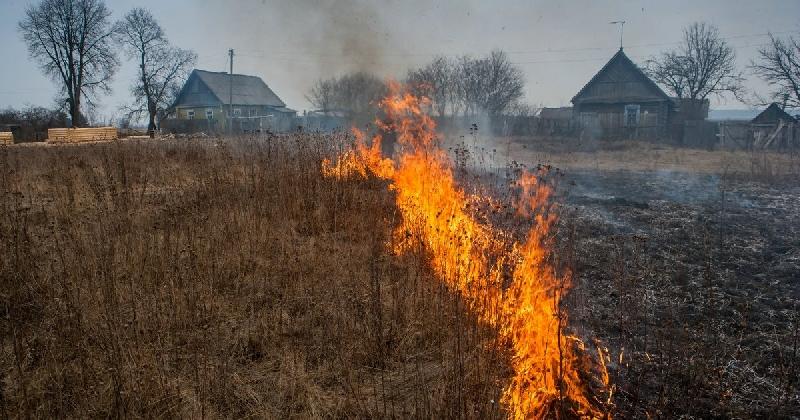 В Смоленской области от пала травы пострадало почти 1000 гектаров земли
