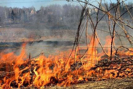 За сутки в Смоленской области зафиксировано 14 палов травы