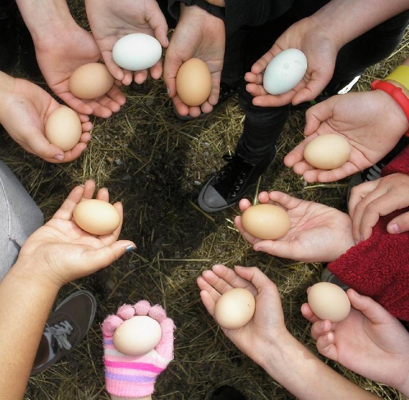 Смолян просят поделиться яйцами с бездомными