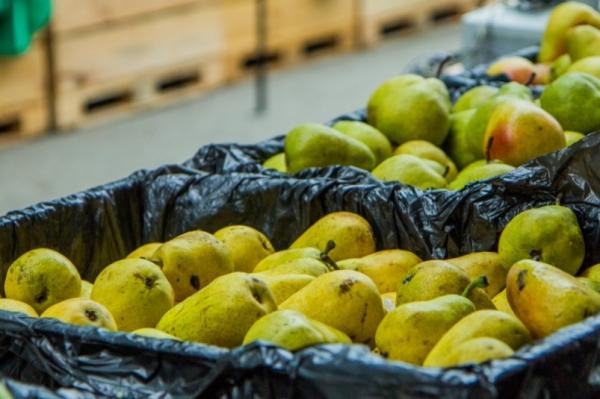 В Смоленской области уничтожили яблоки, груши, зеленый лук, пекинскую капусту и томаты