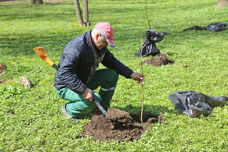 В Смоленске высадили почти 200 деревьев