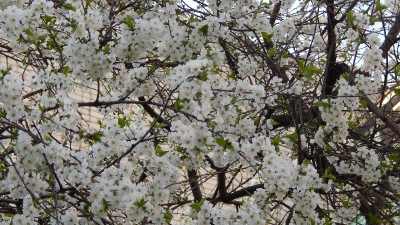 Насколько ощутимо потеплеет в Смоленской области 23 мая
