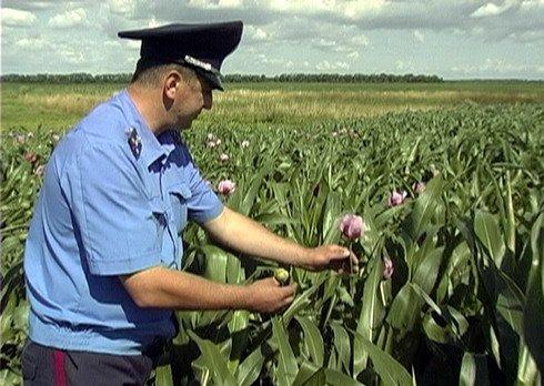 Смоленскую область проверят на наличие незаконных посевов