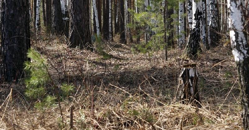 В лесополосе райцентра Смоленской области нашли труп