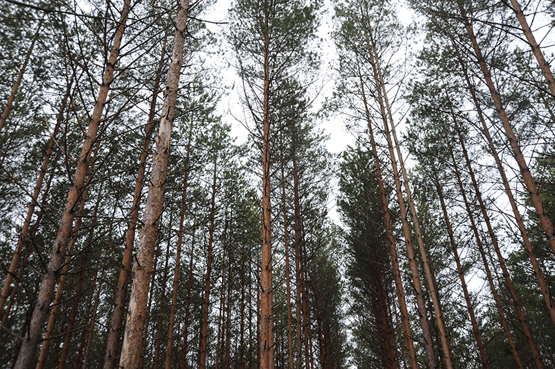 Весной в Смоленской области высадили свыше 8 миллионов деревьев