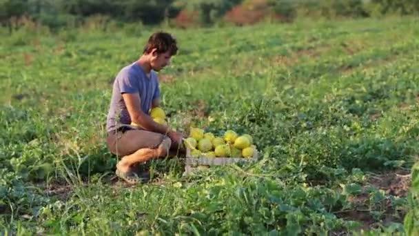 Начинающие смоленские фермеры могут получить гранты
