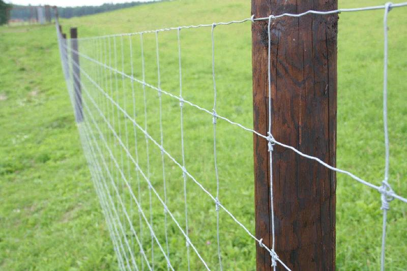 В Смоленской области на трассе М1 установят ограждения от животных
