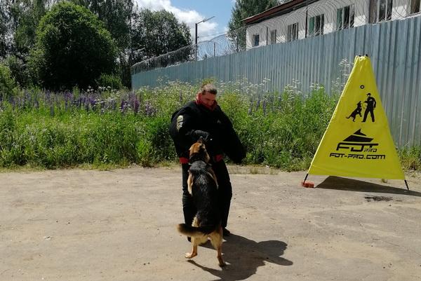 В Смоленской области назвали лучших кинологов и служебных собак