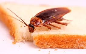 Выбираем средство от тараканов