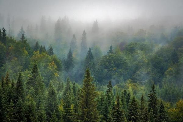 Алексей Островский поддержал инициативу о расширении «зеленого пояса» вокруг Смоленска