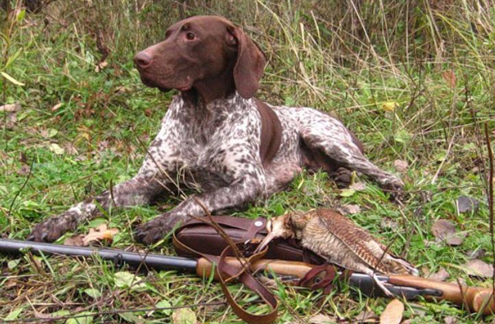 В Смоленской области изменился срок приема заявлений на выдачу разрешений на охоту