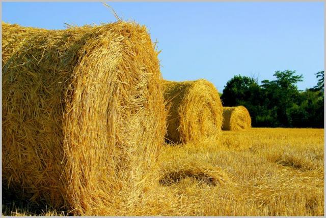 Смоленские сельхозтоваропроизводители активно заготавливают корма