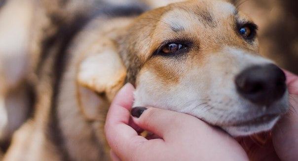 В Смоленске пройдет акция в помощь бездомным животным