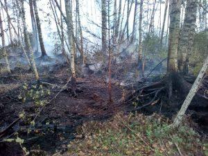 В Смоленской области тушат крупный лесной пожар