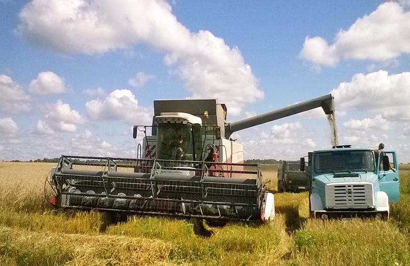 Смоленские аграрии приступили к уборке зерновых и зернобобовых культур