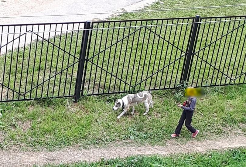 В Смоленске семья, обвиняемая соседями в живодерстве, завела нового питомца