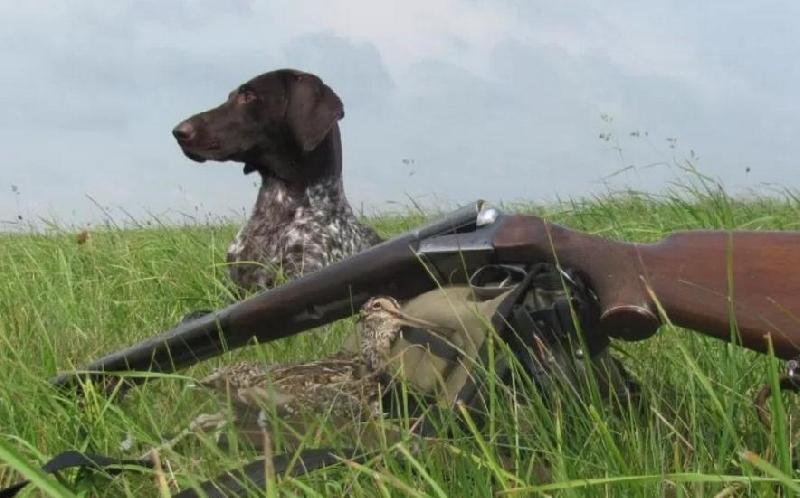 В Смоленской области за два дня выявили 20 нарушений правил охоты