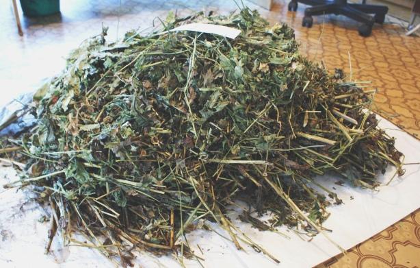 Смолянка превратила свой огород в масштабную наркоплантацию