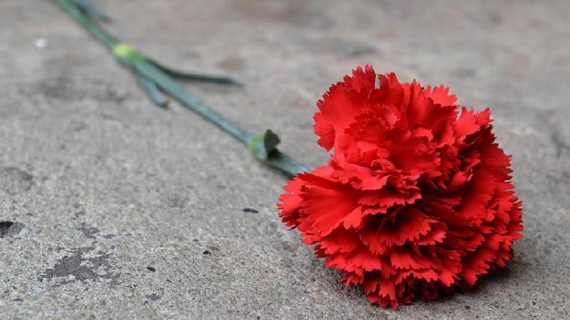 Найденные в Смоленской области останки красноармейца захоронят в Краснодаре