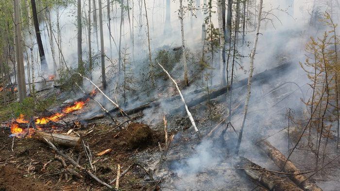 Лесной пожар в Смоленской области потушили