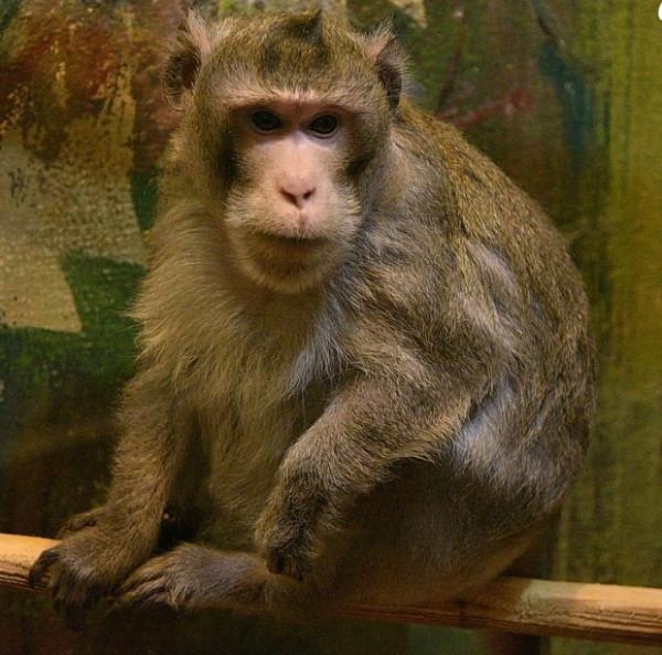 В Смоленском зоопарке выбирают самое красивое животное