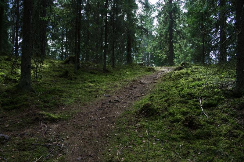 В Смоленской области завершены поиски семейной пары, заблудившейся в лесу