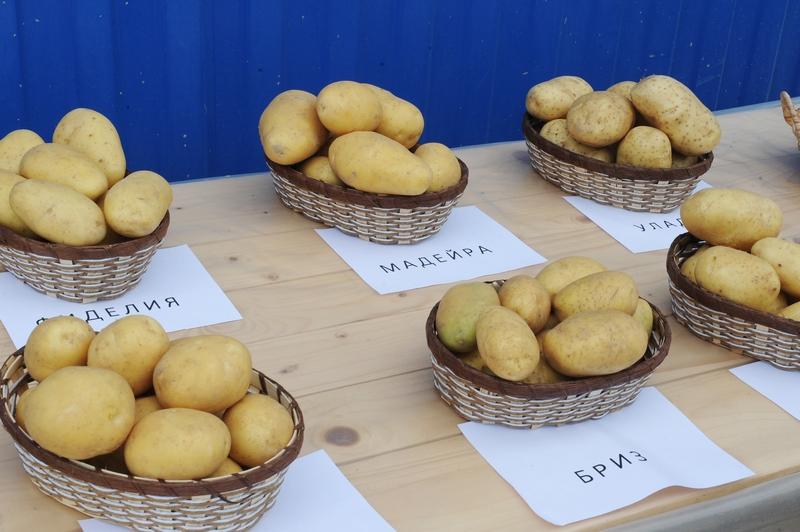 На Смоленщине обсудили стратегию развития семеноводства картофеля