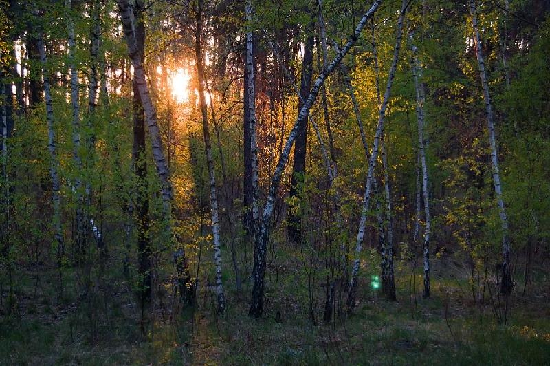 Смолянин решил спрятаться в лесу от приставов