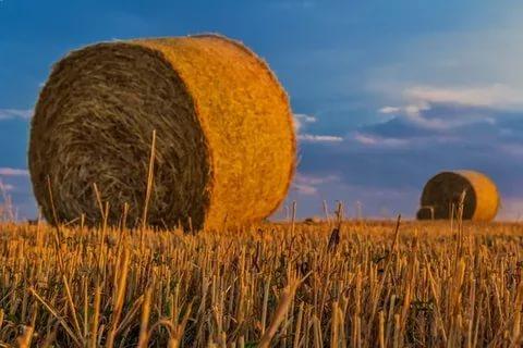 В Смоленской области накажут воров, укравших более 5 тонн соломы