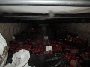 Смоленские таможенники вычислили нарушителей по запаху