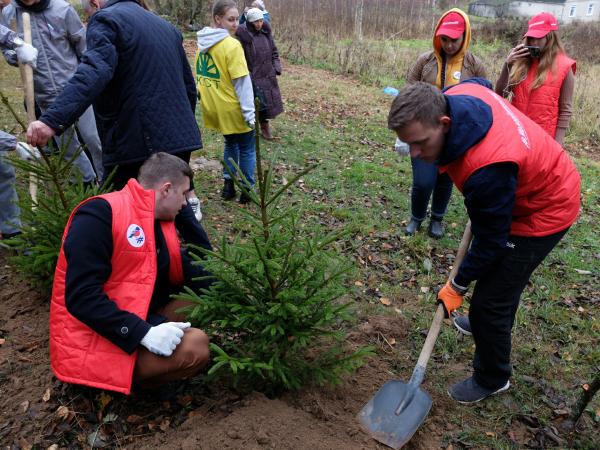 В Смоленском районе у мемориала погибшим советским воинам высадили деревья