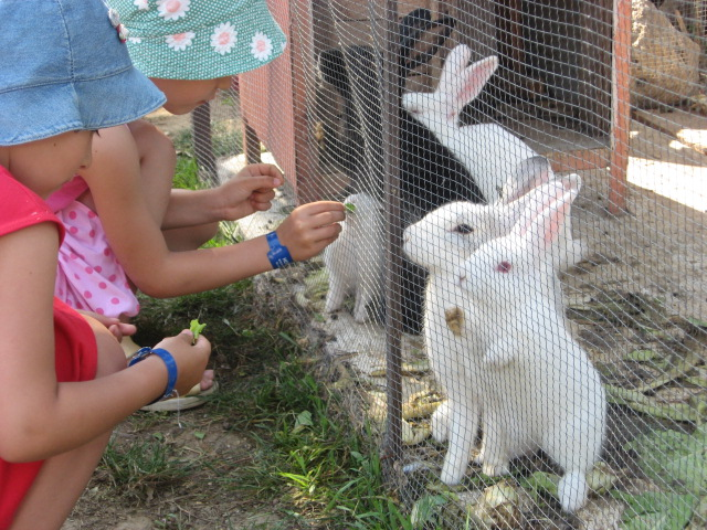 Смолян приглашают на показательные кормления животных в зоопарке