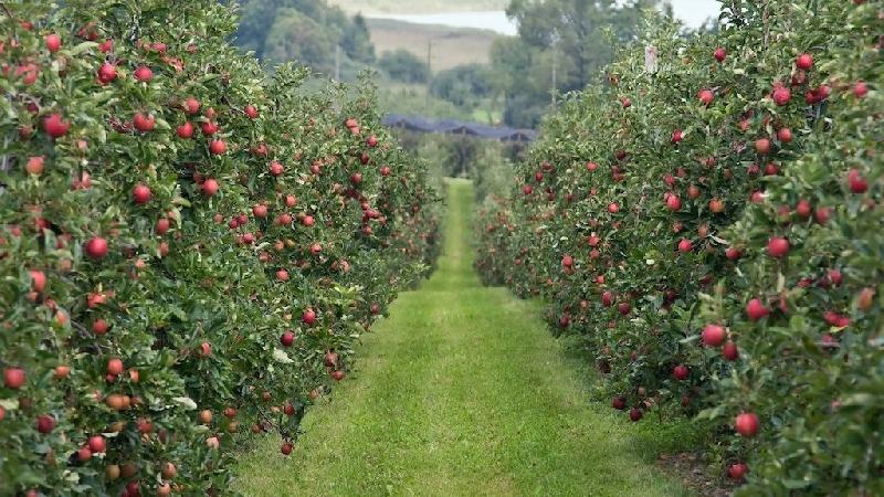 Когда в Смоленской области зацветут сады
