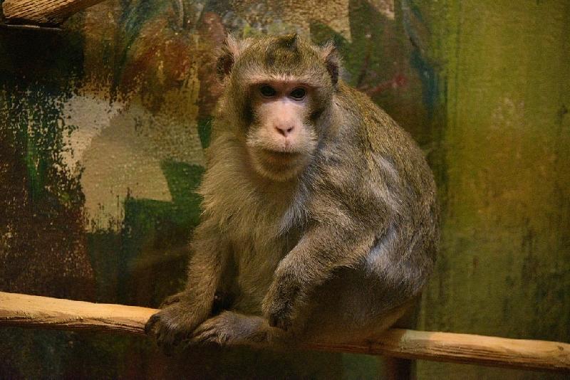 Кто стал самым красивым животным Смоленского зоопарка