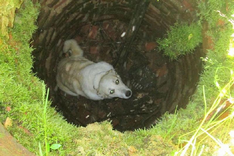 В Смоленске спасли бездомного пса, провалившегося в колодец