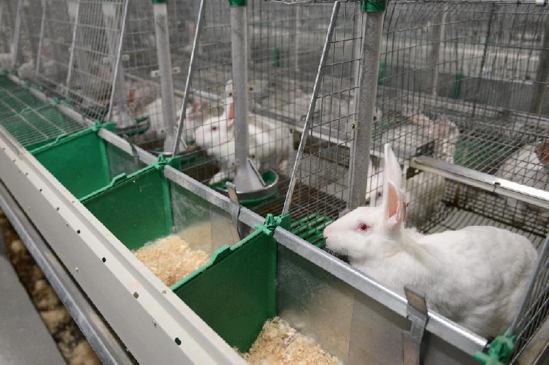 В меню «Аэрофлота» появилось мясо кролика смоленского производителя