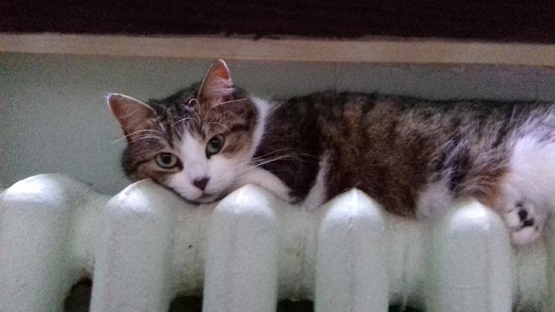 Как Смоленск подключают к теплу