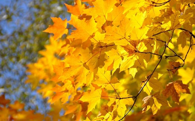 Как изменится погода в Смоленской области 11 октября
