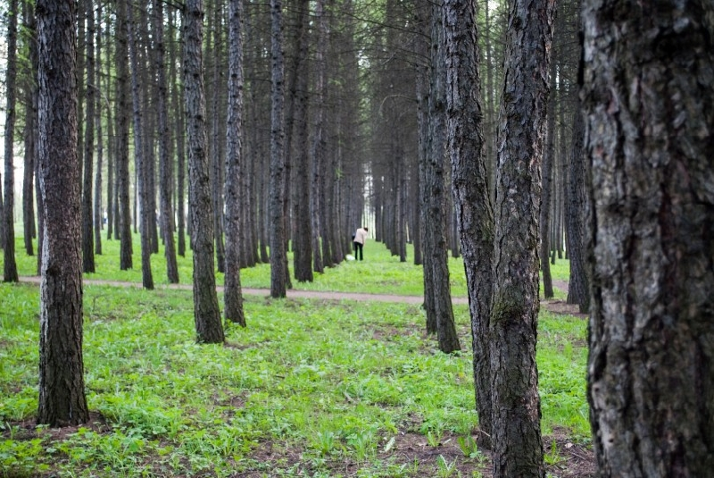 В Смоленске расширят границы «зеленого щита». Где запретят строительство?