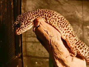В Смоленском зоопарке — пополнение