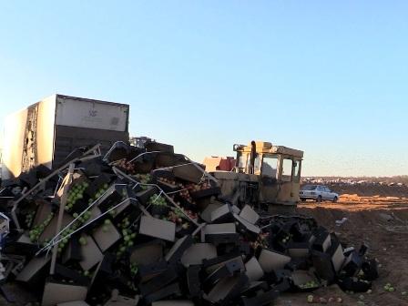 В Смоленской области «похоронили» более 9 тонн яблок из горящего грузовика
