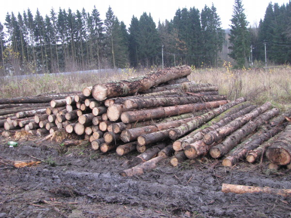 «13 гектаров леса около Днепра в Смоленске вырубают подчистую!»