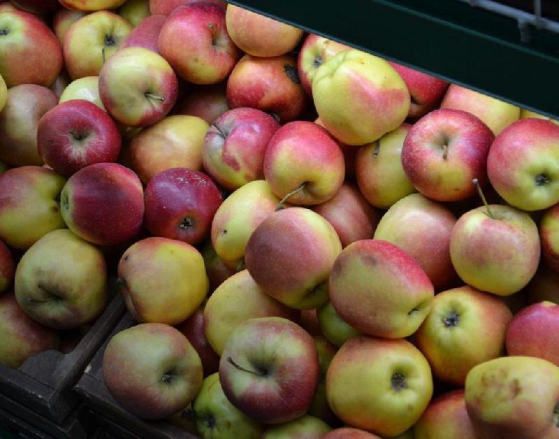Более 18 тонн яблок уничтожили в Смоленской области