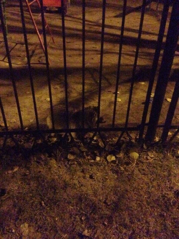 В Смоленске в детский сад пришел енот