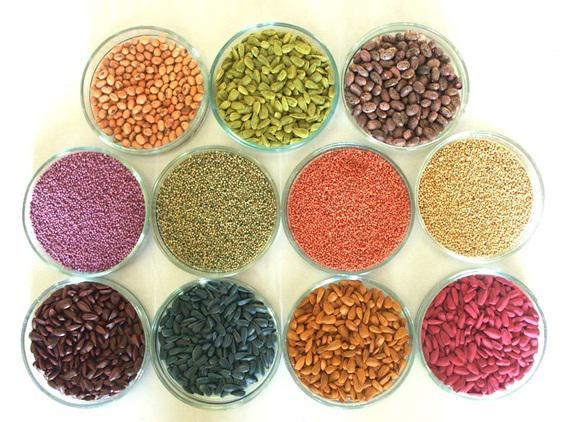 Семена на водорастворимой ленте: технология посадки